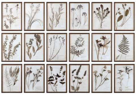 Botany, Set of Eighteen (Priced Separately)